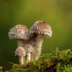 *fuzzy mushrooms