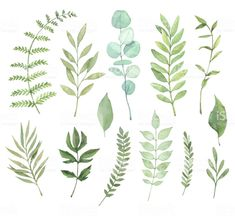 Find Hand Drawn Watercolor Illustrations Botanical Clipart stock images in HD and millions of other royalty-free stock photos, illustrations and vectors in the Shutterstock collection. Leaf Drawing, Floral Drawing, Watercolor Leaves, Floral Watercolor, Watercolor Painting, Free Vector Art, Botanical Art, Watercolor Illustration, Clipart