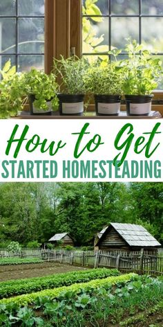 ow to Get Started Homesteading - For someone who just heard of it, homesteading might be a lifestyle that is impossible to achieve in modern times.