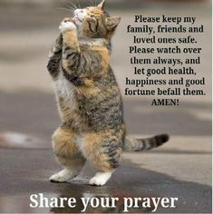 Cute Quotes About Cats. QuotesGram