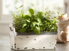 48 Best Herbs And Essential Oils Images Herbs Herbalism 640 x 480