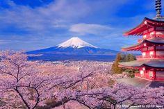 新倉山浅間公園(山梨県)で撮れる3ショット 五重塔×富士山×桜が一度に撮れる!