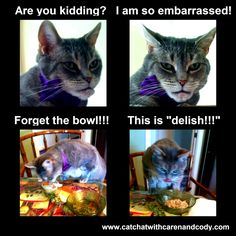 CAT CHAT: Cats! Grab your food bowls, it's DINNER TIME Somewhere! #nutrishforcats Enter to win! #nutrishforcats