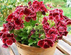 Блог -Топ 10 эффективных средств для защиты растений