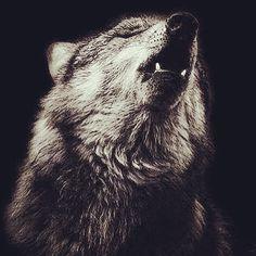 Non c'è nulla di nobile nell'essere superiore a un altro uomo. La vera nobiltà sta nell'essere superiore alla persona che eravamo fino a ieri. Proverbio indù