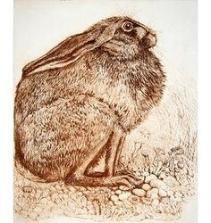 Hare from Cum Golog by Anna Ravenscroft