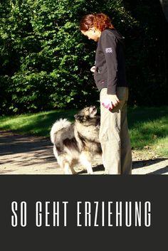 Genau so muss Hundeerziehung aussehen