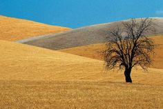 Andalusia by Franco Fontana Minimal Photography, Fine Art Photography, Great Photographers, Landscape Photographers, Land Art, Franco Fontana, Color Of Life, Watercolor Landscape, Landscape Photos