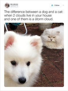 Life Changers: 17 Cats That Made Everything Better - World's largest collection of cat memes and other animals Funny Animal Jokes, Funny Dog Memes, Really Funny Memes, Cute Funny Animals, Funny Animal Pictures, Cute Baby Animals, Cat Memes, Funny Cute, Funny Dogs