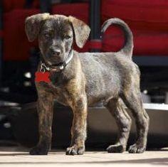 Dogs on Pinterest | Al...