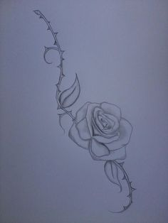 Rose and thorn covered vine drawing Rose Thorn Tattoo, Rose Stem Tattoo, Rose Vine Tattoos, Flower Tattoos, Forearm Tattoos, Sleeve Tattoos, Dorn Tattoo, Vine Drawing, Tattoo Samples