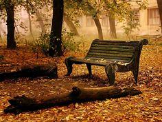 Ognuno dovrebbe trovare il tempo per sedersi e guardare la caduta delle foglie. ELIZABETH LAWRENCE