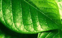 Verde Folha...