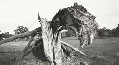 'Monster Field', Carswall's Farm, Newent, Gloucestershire. (1108/L*). PW III. 170x303 mms. 1938