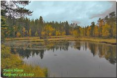 Kuusamo, in the northern Finland -  Watervegetation - mireshore - deciduous trees and shrubs coniferous forests