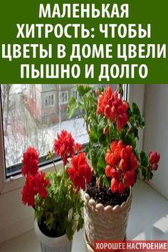#цветы #растения #подкормка #йод #герань #цветение #касторовое #масло Kaya, Garden, Garten, Lawn And Garden, Outdoor, Tuin, Gardens, Yard