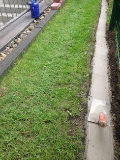 Rasenkanten / Mähkanten Anlegen Leicht Gemacht Vorwort: Wer Sich In Seinem  Garten Pflanzbeete Oder Rabatten