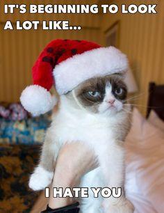 Bwahaha grumpy cat