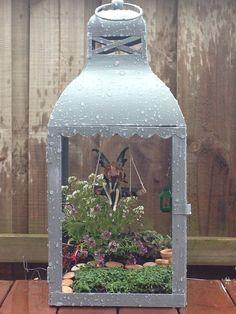 Upcycle an old lantern into a magical little fairy garden. By Fairytale Gardens