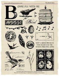 The Bird's Nest Rubber Stamp Collection by oxfordimpressions