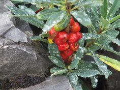 Immer wieder blühende Pflanzen zwischen den Steinen