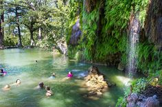 Krause Springs near Austin Texas has 32 springs on the property, and several feed the manmade pool and the natural pool which flows into Lake