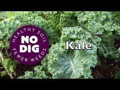 Kale's fantastic range of varieties for tasty harvests, raw or cooked, o...