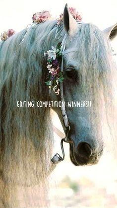 Cute Horses, Horse Love, Beautiful Creatures, Animals Beautiful, Animals Amazing, Most Beautiful Horses, Animals And Pets, Cute Animals, Wild Animals