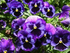 Violet fragrances Archives - Kafkaesque