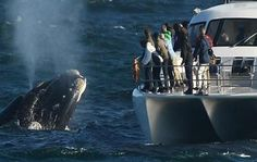 WHALE-WATCHING-PRIVATE-TOURS_lg