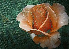 Rainy season. Click image to view art and purchase.  http://www.yourphotofantasy.com  http://angelika-drake.artistwebsites.com