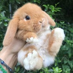 Cute Baby Bunnies, Baby Animals Super Cute, Cute Baby Dogs, Cute Little Animals, Cute Funny Animals, Cute Puppies, Baby Pets, Cutest Animals, Cute Pets