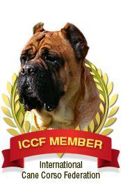 ICCF Member