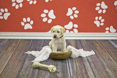 Puppy Photo Shoot featuring a Vintage Wood Floordrop from Backdrop Express! School Portraits, Pet Portraits, Portrait Ideas, Photography Settings, Animal Photography, Puppy Pictures, Puppy Pics, Unique Flooring, Drops Design