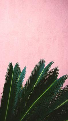 Pin by skyzbelll on plants leaves wallpaper iphone, iphone wallpaper, palm Tumblr Wallpaper, Phone Wallpaper Images, Screen Wallpaper, Aesthetic Iphone Wallpaper, Phone Wallpapers, Cute Wallpapers, Wallpaper Backgrounds, Aesthetic Wallpapers, Leaves Wallpaper Iphone