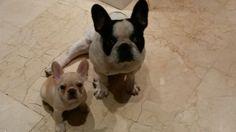Lola y Buda