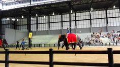 3 The elephant show(SEKO Machinery)