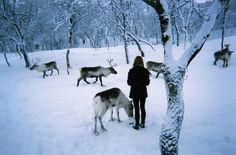 Santa's Reindeer in the woods
