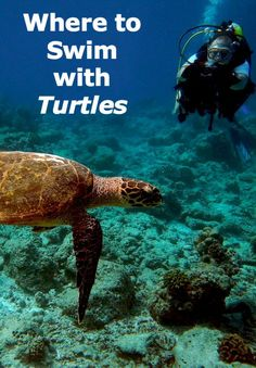 Click through to see Where to Swim with Turtles: travel adventures
