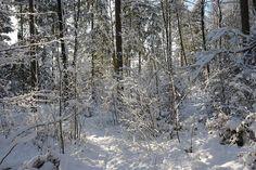Winter in München Süd - Spaziergang durch den Forstenrieder Park