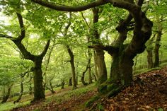 World Heritage Site -- Primeval Beech Forests of the Carpathians and the Ancient Beech Forests of Germany, Slovakia