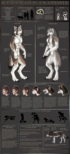 Werewolf Anatomy by =sugarpoultry on deviantART