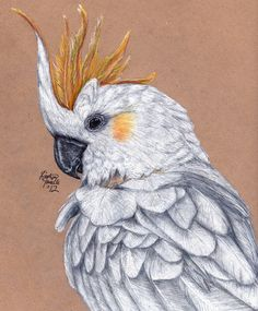 Carlitos the Citron-Crested Cockatoo by KristynJanelle.deviantart.com