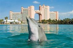 Atlantis Resort in Bahamas! I want to swim with dolphins and find lost treasures! ALSO get a tan and relax!