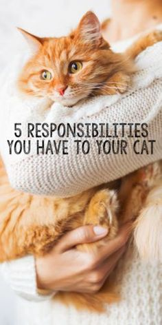 February is National Responsible Pet Owner Month. This is an important topic because, sadly, not everyone understands what it means to be a responsible pet owner. Here are a few things that pet parents often overlook when caring for their cats.