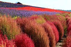 いきたいいいい!   Hokkaido Photos at Frommer's - Hokkaido. Photo by Wend In Leong/Frommers.com Community