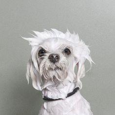 Cachorro e banho. Foi pensando nisso que a fotógrafa Sophie Gamand resolveu criar a Wet Dog, série que traz retratos de cães molhados e suas expressões.