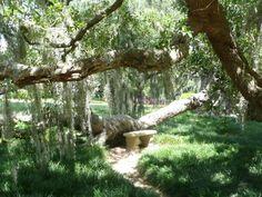 Rip Van Winkle Gardens photos | Rip Van Winkle House Gardens - Jefferson Island, La