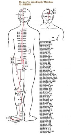 Pin by Julie Lott on acupuncture Acupuncture Points Chart, Meridian Acupuncture, Acupressure Points, Massage Images, Meridian Points, Trigger Point Therapy, Mudras, Traditional Chinese Medicine, Massage Therapy