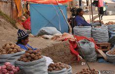 FAO: Grandes progresos en lucha contra el hambre
